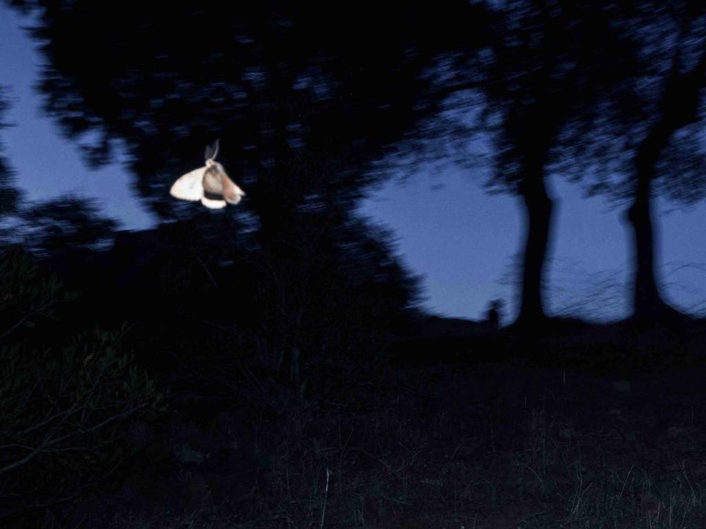 ©Marcello Nocera - Dreamer 1